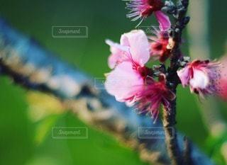 自然の写真・画像素材[48823]