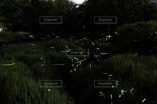 自然の写真・画像素材[585513]