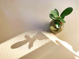 インテリア、植物の写真・画像素材[1500632]