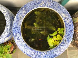 レトロな金魚鉢。の写真・画像素材[1520804]