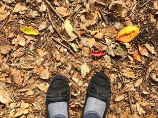 秋の公園、落ち葉の道を散歩の写真・画像素材[1576077]