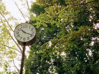 公園の木々と時計の写真・画像素材[1576091]