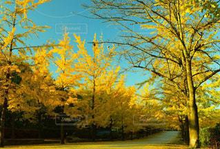 秋の写真・画像素材[1592190]