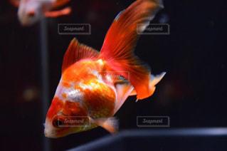 近くに魚のアップの写真・画像素材[1747850]