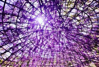 紫色の傘の写真・画像素材[2106080]