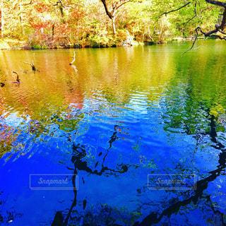 紅葉の季節の写真・画像素材[1501797]