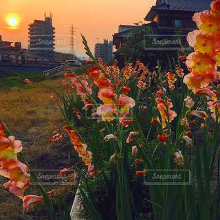 近くの花のアップの写真・画像素材[1527208]