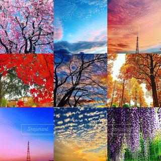 空、花、夕焼け、鉄塔の写真・画像素材[1527229]