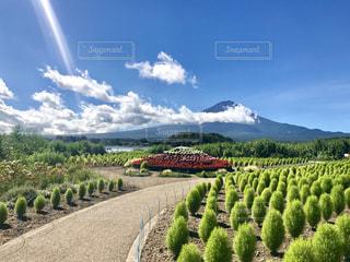 大石公園からの富士山の写真・画像素材[1500505]