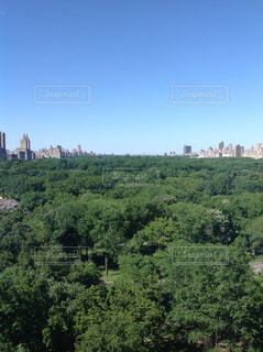 ニューヨーク、セントラルパークの写真・画像素材[1500698]