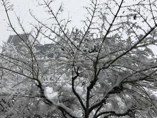 雪と樹木の写真・画像素材[1505749]