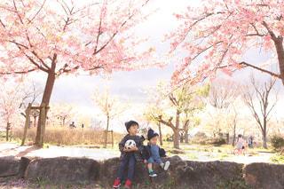 春の始まりの写真・画像素材[3015544]