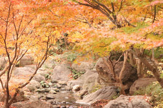 庭園の紅葉の写真・画像素材[3142245]