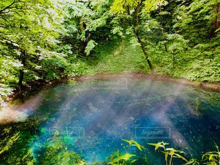 森の中の池の写真・画像素材[1504586]
