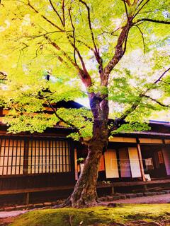 樹木と武家屋敷の写真・画像素材[1557314]