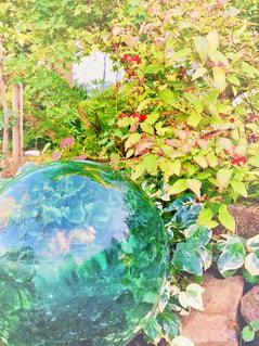 ガラス庭の写真・画像素材[1576947]