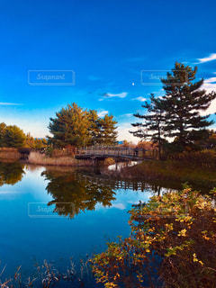 池に映る木々の写真・画像素材[1626688]