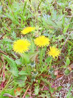 緑の葉の黄色い花の写真・画像素材[3188595]
