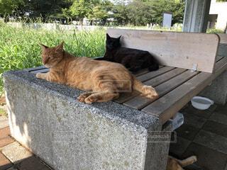 ベンチに座っている猫の写真・画像素材[2423481]