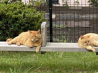 猫の隣のベンチに座っているライオンの写真・画像素材[3394588]