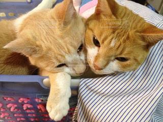 仲良し猫の写真・画像素材[1501922]