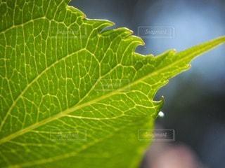 緑の写真・画像素材[55045]