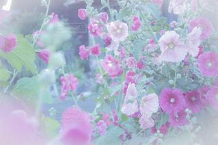 近くの花のアップの写真・画像素材[1504447]