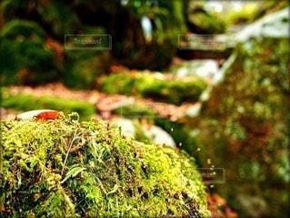 自然の写真・画像素材[49276]
