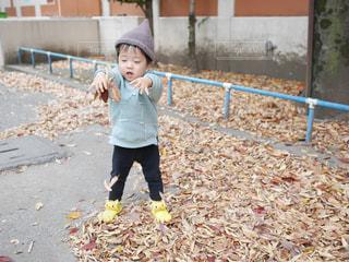 落ち葉で遊ぶ男の子の写真・画像素材[1511333]