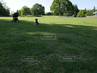 芝生で遊ぶ男の子の写真・画像素材[1515102]