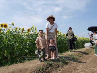 ひまわり畑の写真・画像素材[2398072]