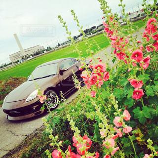 立葵と車の写真・画像素材[1504821]