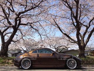 桜と車の写真・画像素材[1504828]