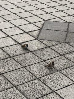スズメの写真・画像素材[2426078]