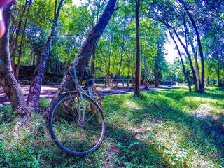 自然に飲まれた遺跡と自転車の写真・画像素材[1512444]