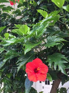 夏の花の写真・画像素材[1527352]