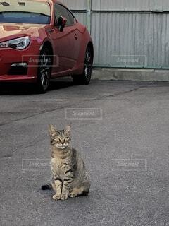 猫さんの写真・画像素材[1567300]