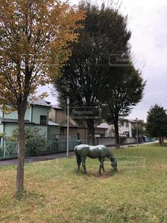 馬の像の写真・画像素材[1593118]