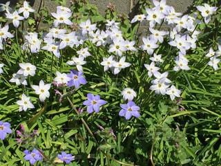 遊歩道わきの花壇の写真・画像素材[1644847]