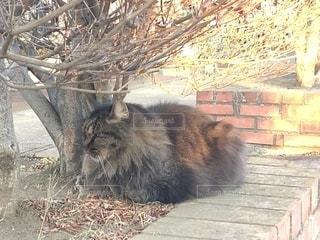 冬の猫の写真・画像素材[1715111]