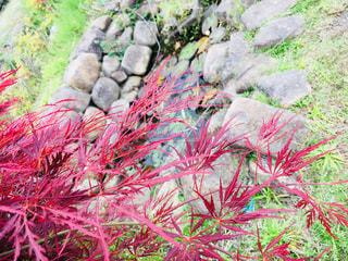 植物の木の成長の写真・画像素材[1509417]