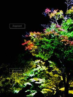 京都の夜ライトアップの写真・画像素材[1512935]