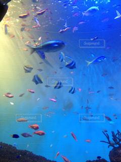 魚の世界の写真・画像素材[1523434]