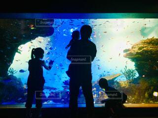神秘的な水族館の写真・画像素材[1564939]