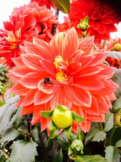 近くの花のアップの写真・画像素材[1564958]