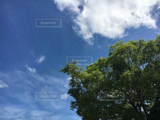秋晴れの空の写真・画像素材[1576286]