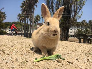 大自然の中のウサギ達の写真・画像素材[2448765]