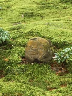 癒しのお地蔵さんの写真・画像素材[1523346]