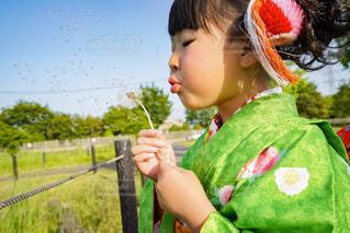たんぽぽのわたげをふく女の子の写真・画像素材[1508903]