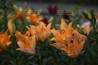 お花畑の写真・画像素材[49720]